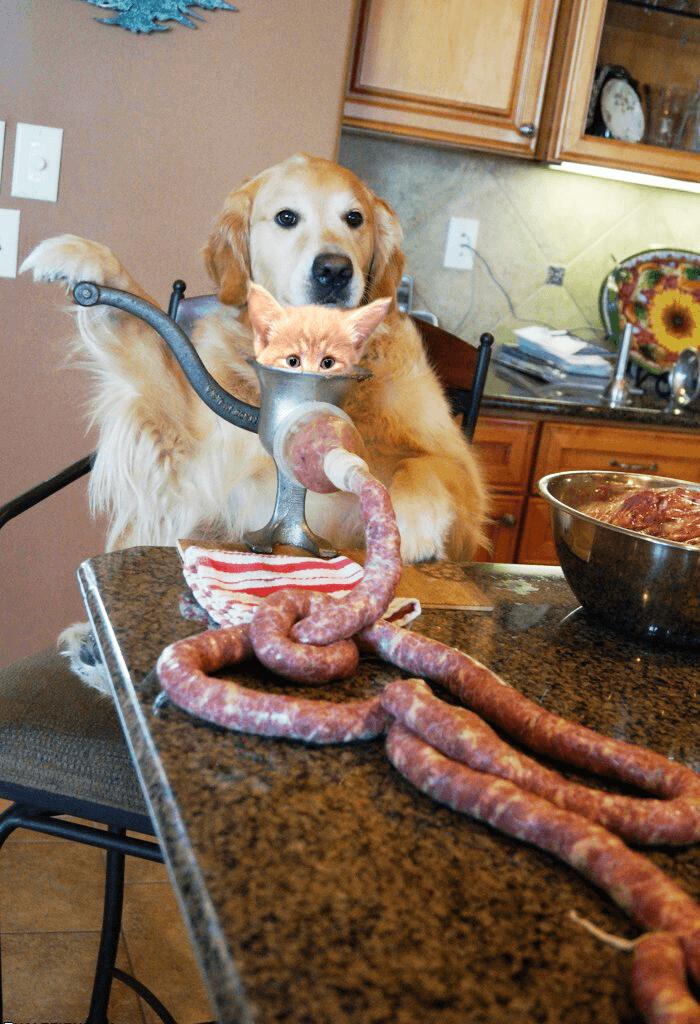 Cursed doggo